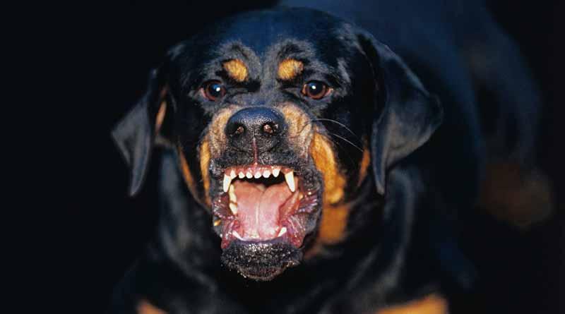 a7f09e52c2b Βρέφος 14 μηνών σκοτώθηκε από επίθεση σκύλου της οικογένειάς του ...