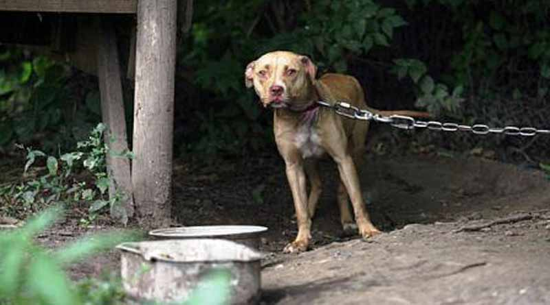 Τέσσερις περιπτώσεις κακοποίησης ζώων σε δύο 24ωρα σε Καλύβια, Κορωπί &  Παλλήνη! | iRafina